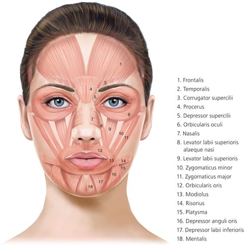 The gallery for --> Levator Palpebrae Superioris Botox